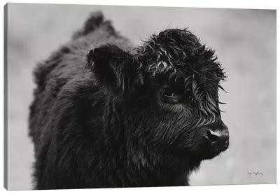 Scottish Highland Cattle XI In Black & White Canvas Art Print