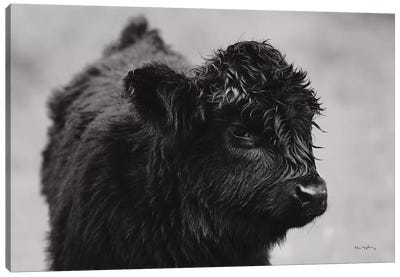 Scottish Highland Cattle XI In Black & White Canvas Art Print