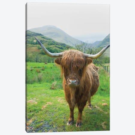 Scottish Highland Cattle VI Canvas Print #MJC78} by Alan Majchrowicz Canvas Wall Art