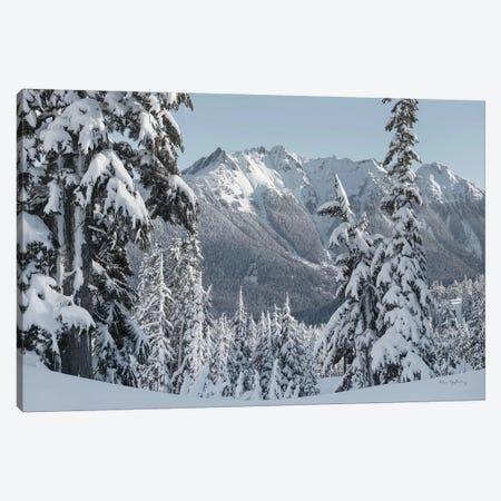 Nooksack Ridge in Winter Canvas Print #MJC89} by Alan Majchrowicz Canvas Print