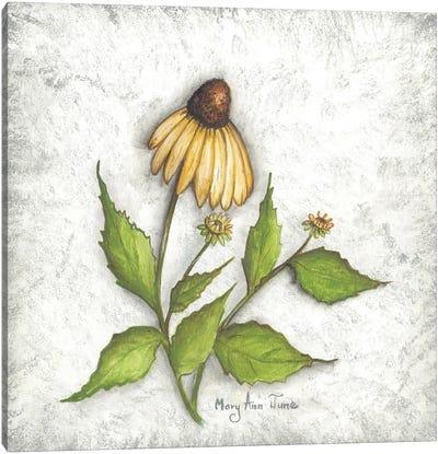 Bloomin' Coneflowers Canvas Art Print