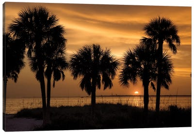 Tropical Park Sunset Canvas Art Print