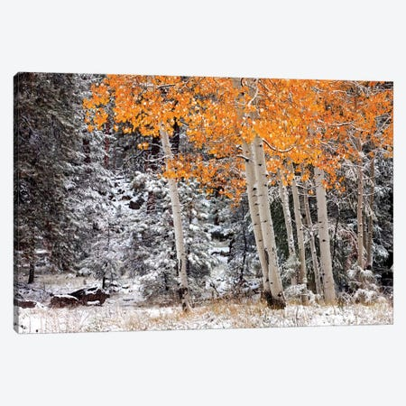 A Little Bit Of Winter Canvas Print #MJO1} by Mike Jones Canvas Print