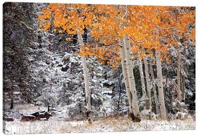 A Little Bit Of Winter Canvas Art Print