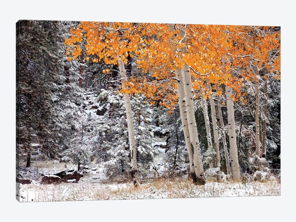 A Little Bit Of Winter by Mike Jones 1-piece Canvas Art