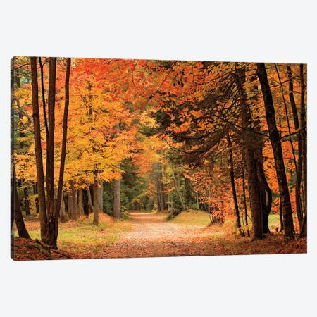 Autumn Walk Canvas Print #MJO3} by Mike Jones Canvas Print