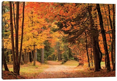 Autumn Walk Canvas Art Print