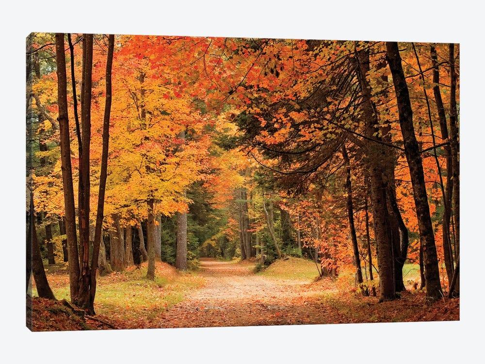 Autumn Walk by Mike Jones 1-piece Canvas Artwork