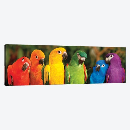 Rainbow Parrots Canvas Print #MJO7} by Mike Jones Canvas Artwork