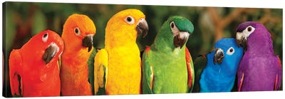 Rainbow Parrots Canvas Art Print