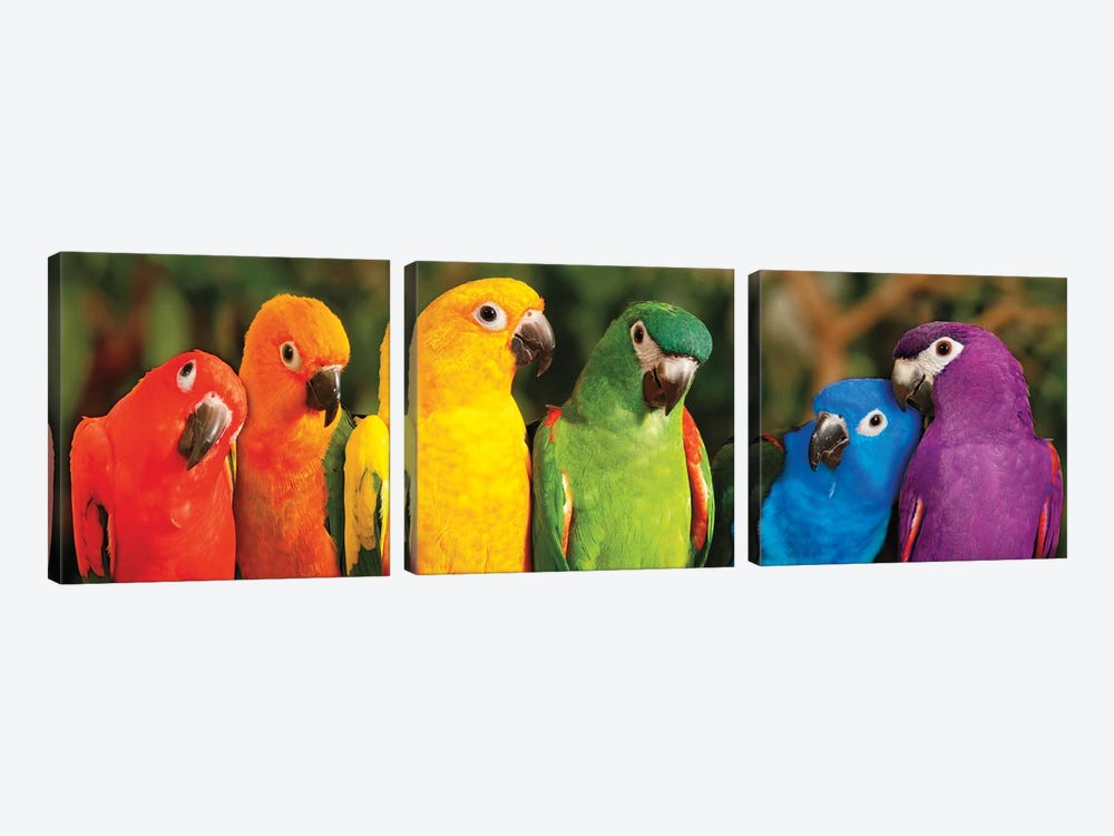 Rainbow Parrots by Mike Jones 3-piece Canvas Wall Art