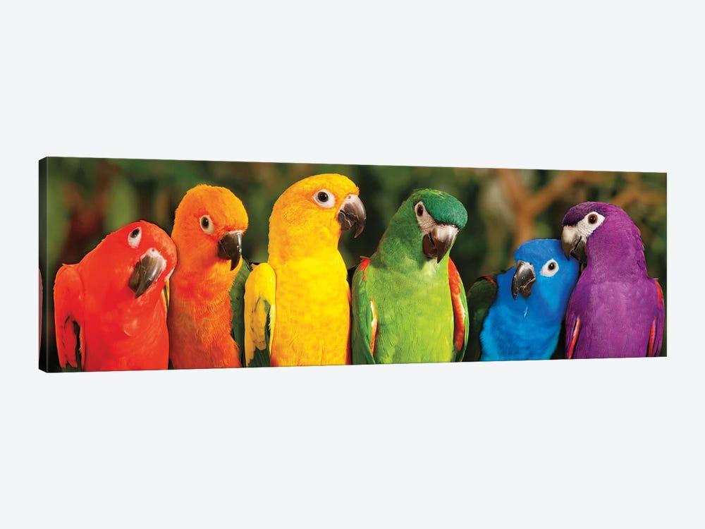 Rainbow Parrots by Mike Jones 1-piece Canvas Art