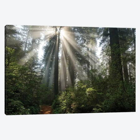 Shine On You Canvas Print #MJO9} by Mike Jones Canvas Print