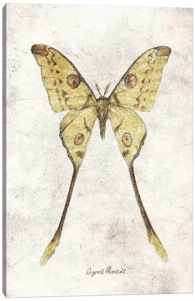 Argema Mimosae Canvas Art Print