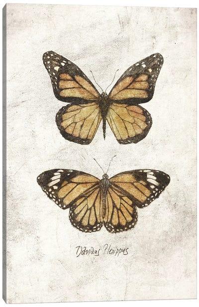 Danaus Plexippus Canvas Art Print