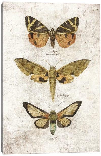 Butterflies VI Canvas Art Print