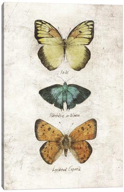 Butterflies V Canvas Art Print