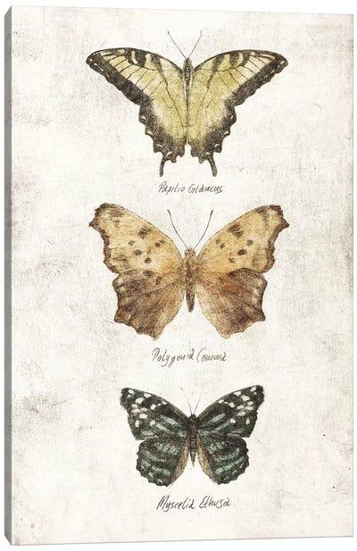 Butterflies II Canvas Art Print