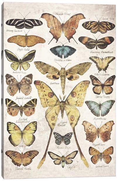 Butterflies And Moths Canvas Art Print