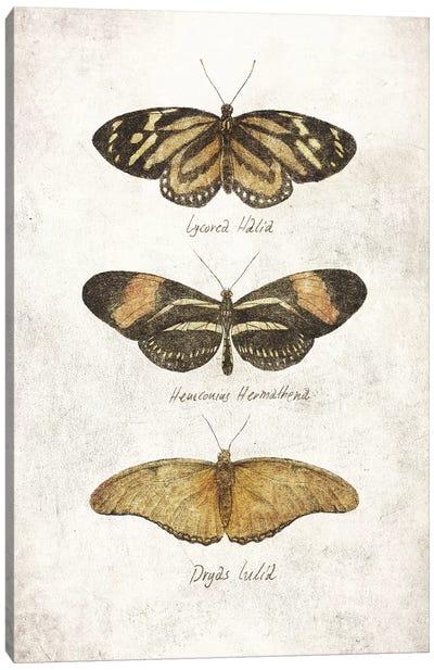 Butterflies III Canvas Art Print
