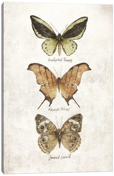 Butterflies IV Canvas Art Print