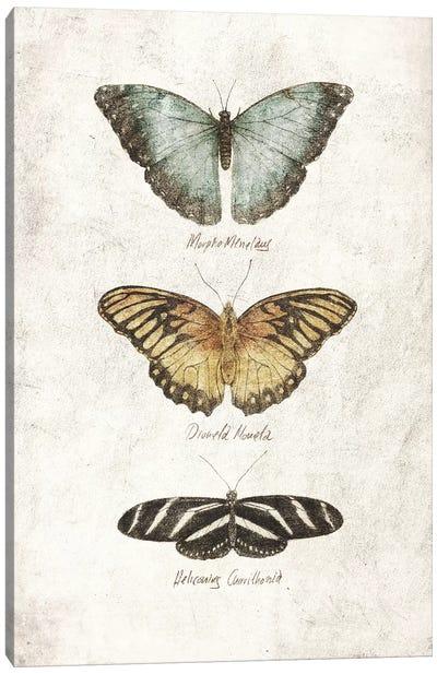 Butterflies I Canvas Art Print