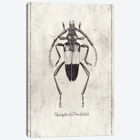 Pachyteria Dimidiata Canvas Print #MKB134} by Mike Koubou Canvas Artwork