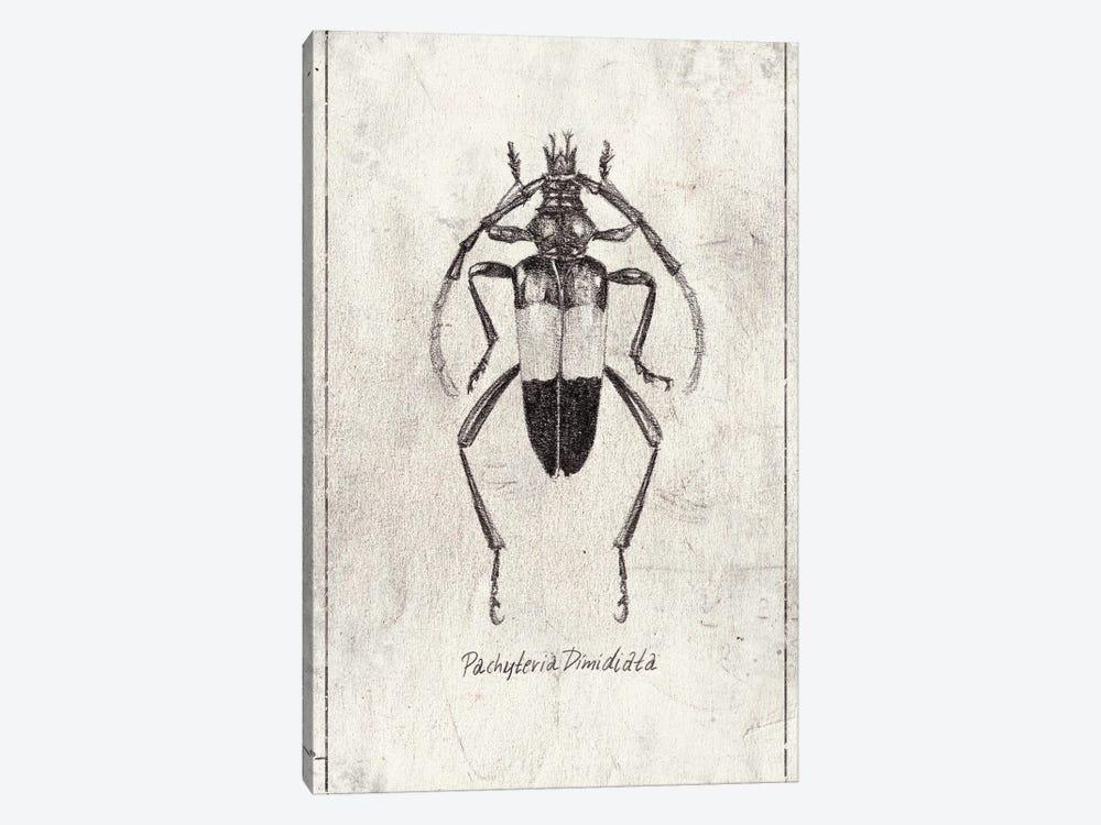 Pachyteria Dimidiata by Mike Koubou 1-piece Canvas Art
