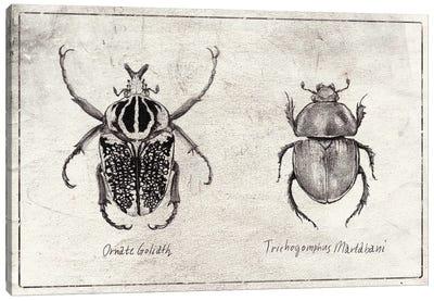 Ornate Goliath- Trichogomphus Martabani Canvas Art Print