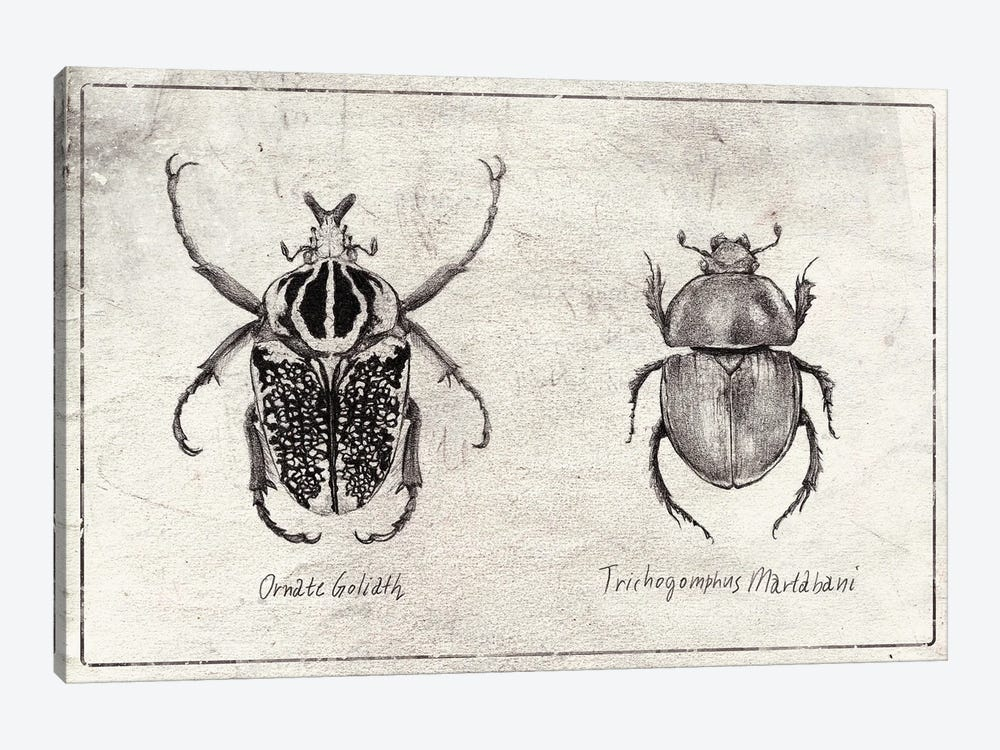 Ornate Goliath- Trichogomphus Martabani by Mike Koubou 1-piece Canvas Art