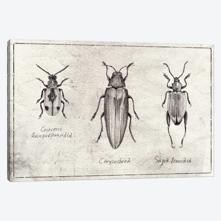 Crioceris Quinquepunctata- Chrysochroa-Sagra Femorata Canvas Print #MKB137} by Mike Koubou Canvas Wall Art