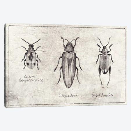 Crioceris Quinquepunctata- Chrysochroa-Sagra Femorata Canvas Print #MKB137} by Mike Koubou Canvas Wall Art