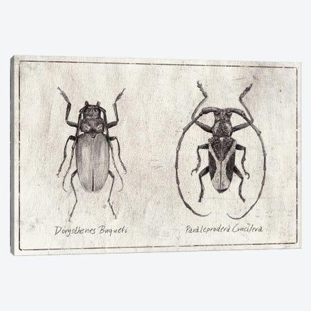 Dorysthenes Buqueti - Paraleprodera Canvas Print #MKB138} by Mike Koubou Canvas Print