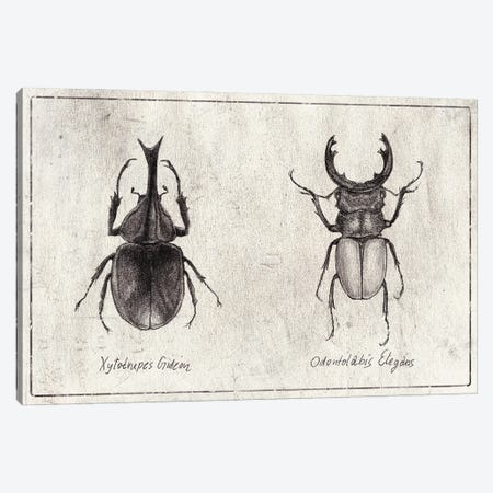 Xylotrupes Gideon-Odontolabis Elegans Canvas Print #MKB139} by Mike Koubou Canvas Art Print