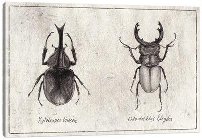 Xylotrupes Gideon-Odontolabis Elegans Canvas Art Print