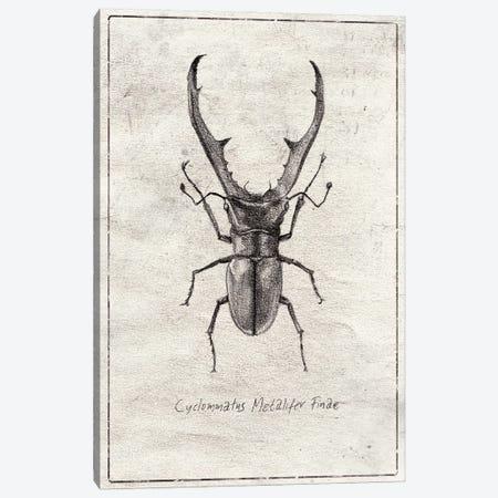 Cyclommatus Metalifer Finae Canvas Print #MKB140} by Mike Koubou Canvas Wall Art