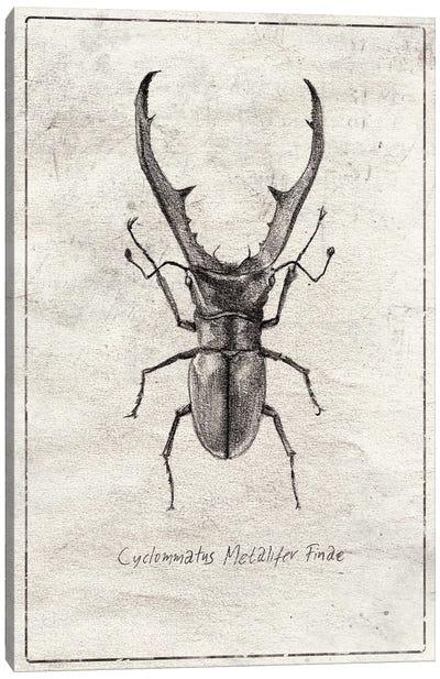 Cyclommatus Metalifer Finae Canvas Art Print