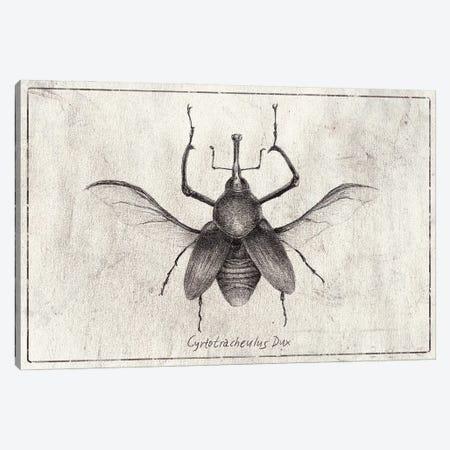 Cyrtotracheulus Dux Canvas Print #MKB142} by Mike Koubou Canvas Wall Art