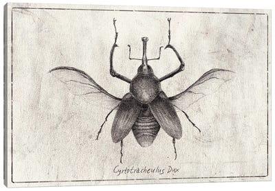 Cyrtotracheulus Dux Canvas Art Print