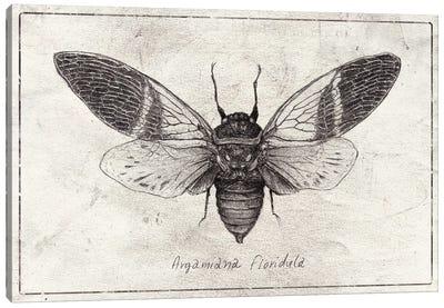 Argamiana Floridula Canvas Art Print