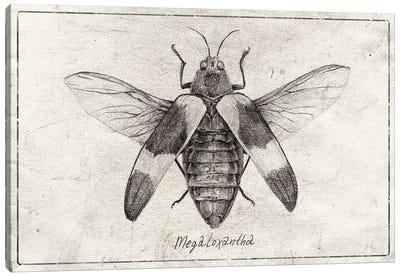 megaloxanthia Canvas Art Print
