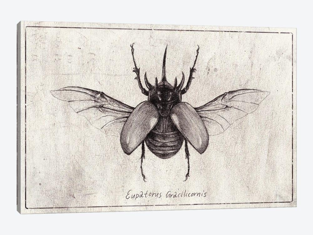 Eupatorus Gracilicornis by Mike Koubou 1-piece Canvas Art