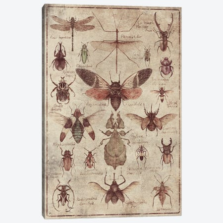 Vintage Insects Canvas Print #MKB148} by Mike Koubou Canvas Art