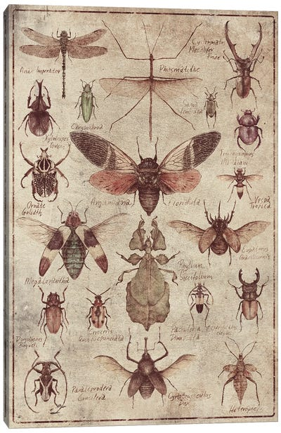 Vintage Insects Canvas Art Print