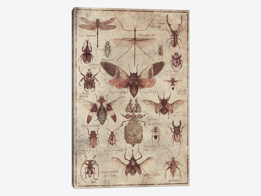 Vintage Insects by Mike Koubou 1-piece Canvas Art Print