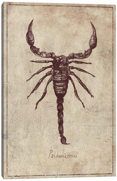 Palamnaersus Canvas Art Print