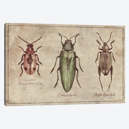 Crioceris Quinquepunctata- Chrysochroa-Sagra Femorata 2 Canvas Print #MKB151} by Mike Koubou Art Print