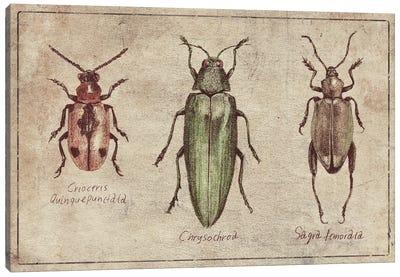 Crioceris Quinquepunctata- Chrysochroa-Sagra Femorata 2 Canvas Art Print