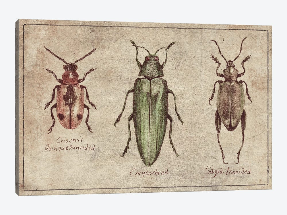 Crioceris Quinquepunctata- Chrysochroa-Sagra Femorata 2 by Mike Koubou 1-piece Art Print