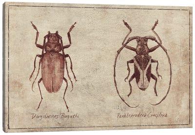 Dorysthenes Buqueti-Paraleprodera Crucifera Canvas Art Print